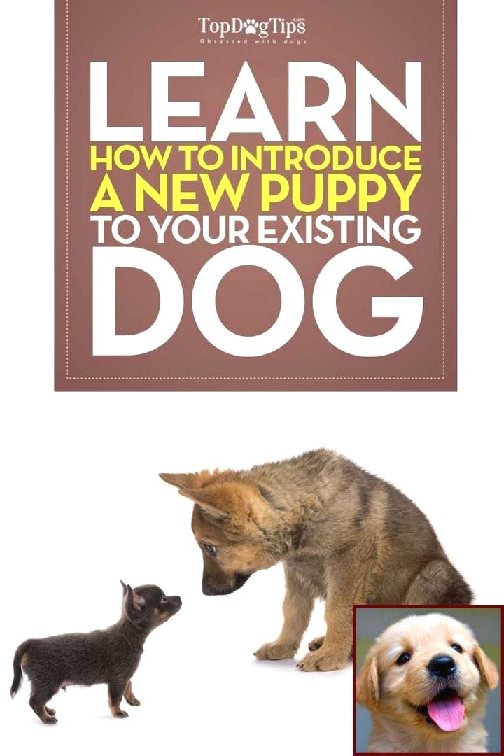 How To Train Your Dog To Not Pee Inside And How To Train Your Dog