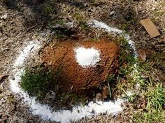 destroying ant hills