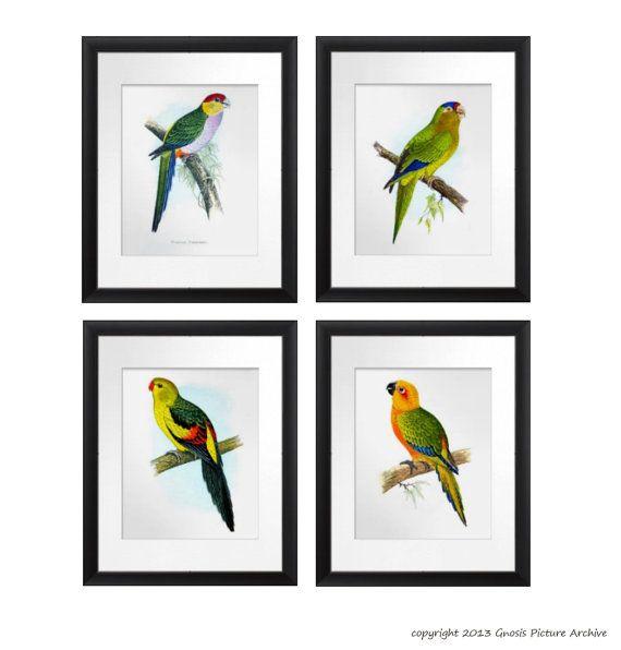 1000 Ideas About Bird Wall Art On Pinterest: 1000+ Images About Parrot Antique Bird Prints On Pinterest