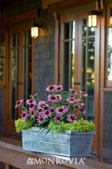 1000 Images About Container Gardens On Pinterest Window Boxes Container Plants And Container