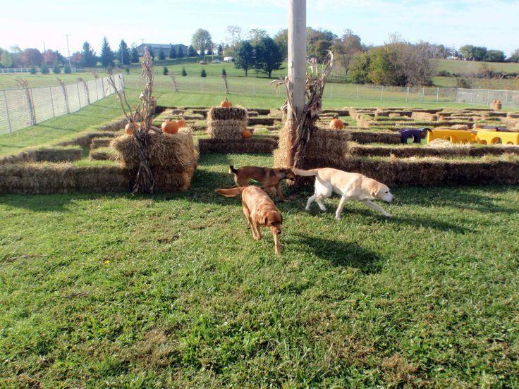 Reisterstown Boarding Kennels Pet Resort Spa