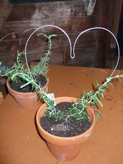 How To Create Your Own Rosemary Topiary