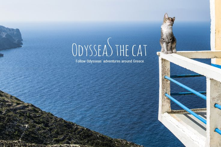 #OdysseasTheCat is one busy cat. From one island to another, now he is trying to decide his next stop. Where should #OdysseasGoesTo next?