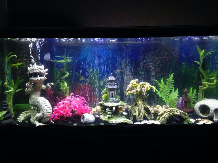 1000 images about fish tank ideas tips and info on for Decoration zen aquarium