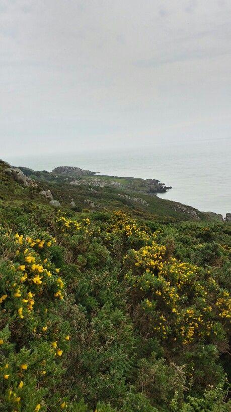 The Cliff Walk - Howth, Ireland