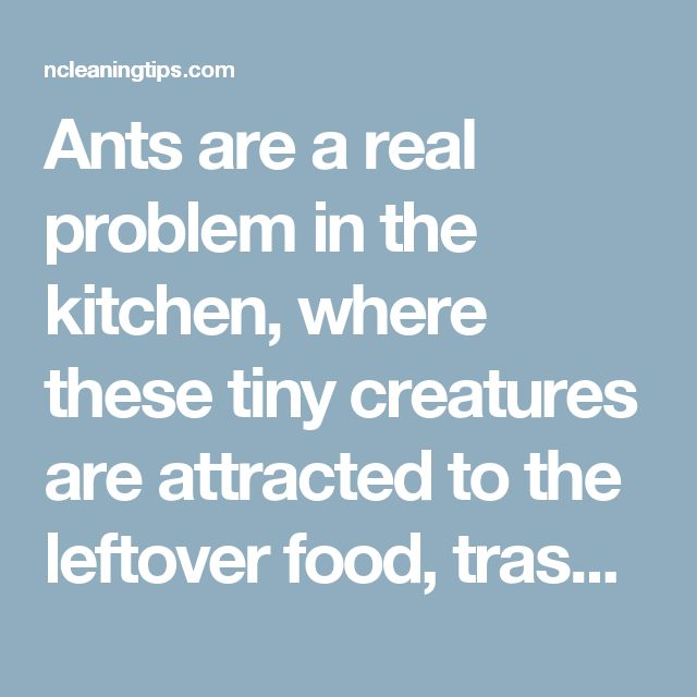 Ants are a real problem in the kitchen, where these tiny creatures are attracted to the leftover food, trash or simply sugar granules accidentally dropped and forgotten in some corner of the room.  Many housewives resort to toxic substances when it comes to killing the ants. The good news is that there are many other natural ways, less hazardous to your health.  Borax and sugar solution  Direction:  1. Boil water, then pour in empty jar.  2. Add sugar and borax to hot water and stir until…