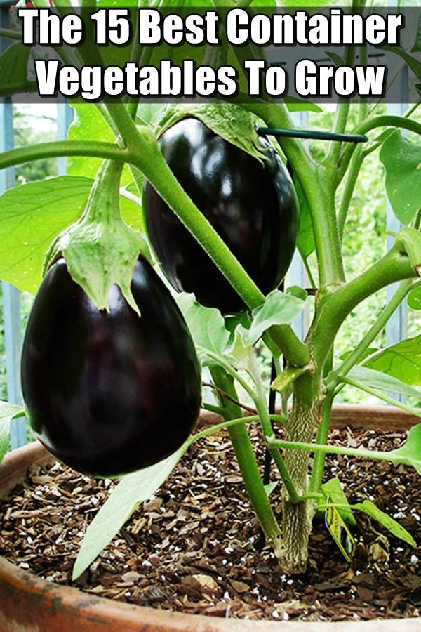 """Here Are 15 Of The Best Container Vegetables To Grow This Year - One of the most asked questions I get is """"what vegetables can I grow in containers"""" I get asked this because quite a few of us can't garden because we rent or live in an apartment and only have a small balcony or patio."""