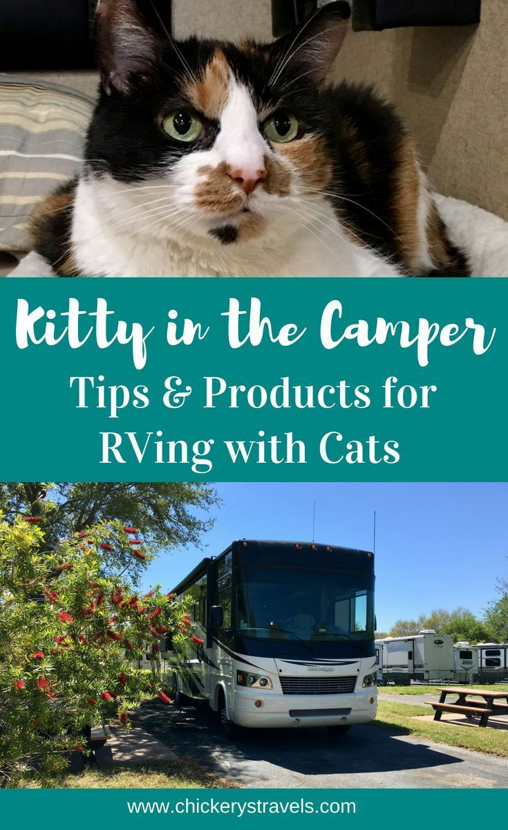 Pin By Nichole Clifford On Minimalist Living Camping With Cats