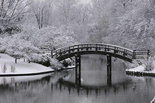 Japanese Garden by Missouri Botanical Garden, via Flickr