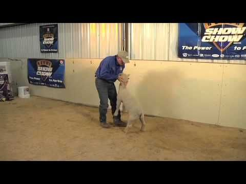 Teaching Lambs to Brace