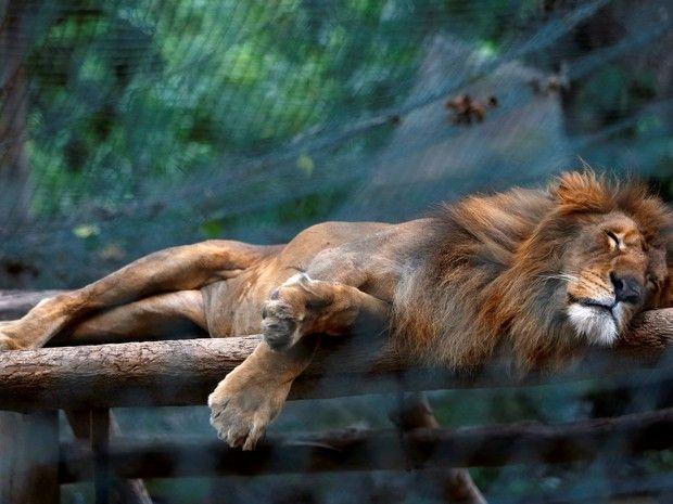 Em meio à crise econômica na Venezuela, o maior zoológico de Caracas sofre com a escassez de alimentos e já contabilizou a morte de cerca de 50 animais nos últimos seis meses. Outros estabelecimentos também enfrentam dificuldades no país.
