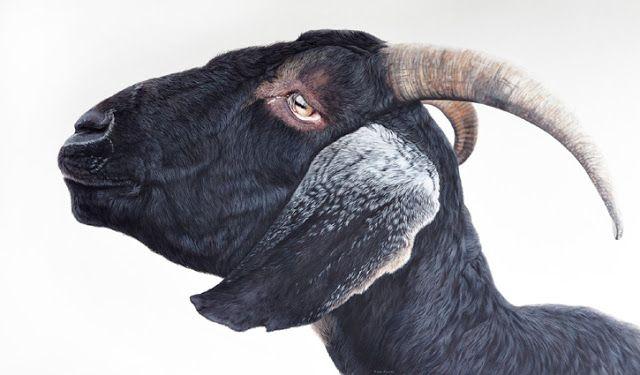 WOW!! Fine Art and You: Ester Curini | Italian Animal Painter