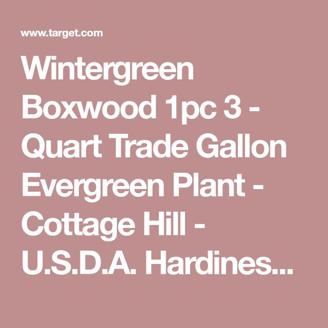 Wintergreen Boxwood 1pc 3 - Quart Trade Gallon Evergreen Plant - Cottage Hill - U.S.D.A. Hardiness Zones 4 - 9 : Target