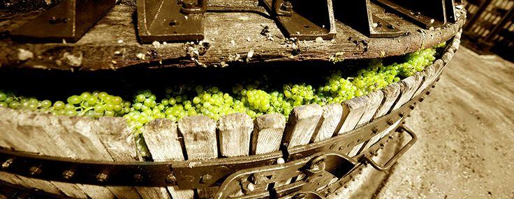 Champagne press www.the-champagne.ch