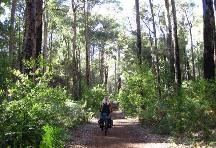 Munda Biddi Trail Western Australia
