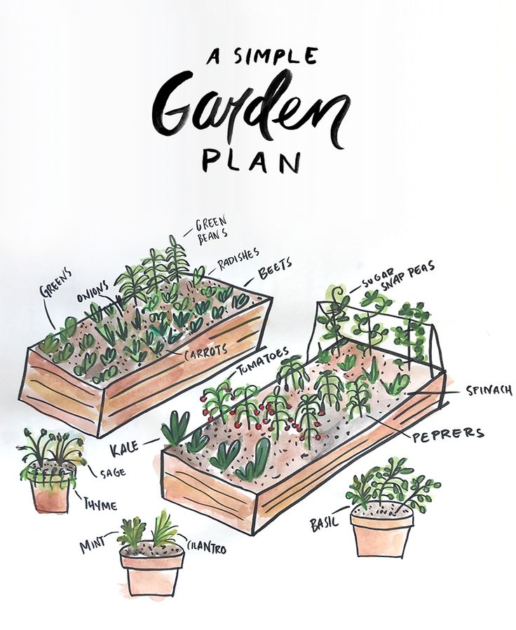 A Simple Garden Plan to help you plan your first garden. Your first garden can feel overwheleming, but this simple plan will help you have a launching point for a raised bed garden most anyone can do themselves.