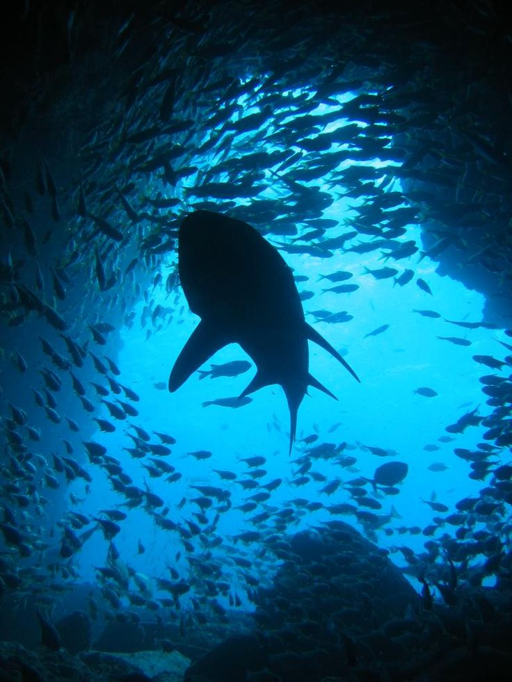 Australia NSW Announces Shark Protection Moves #sharks #Australia