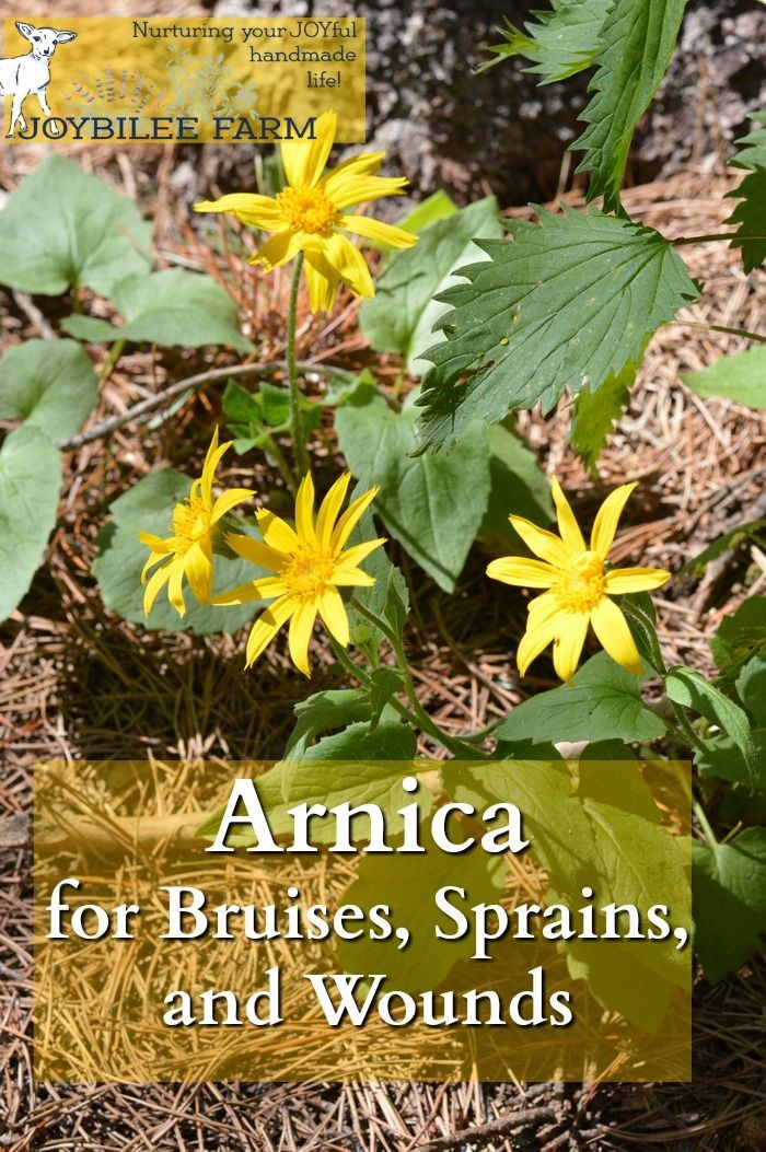 Arnica montana is one of the very best herbal remedies for bruises, sprains, and strains. Here's how to identify arnica in the wild and use it for herbal remedies.