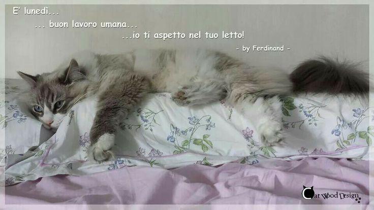 Buon #lunedi!!! #gatti #cat