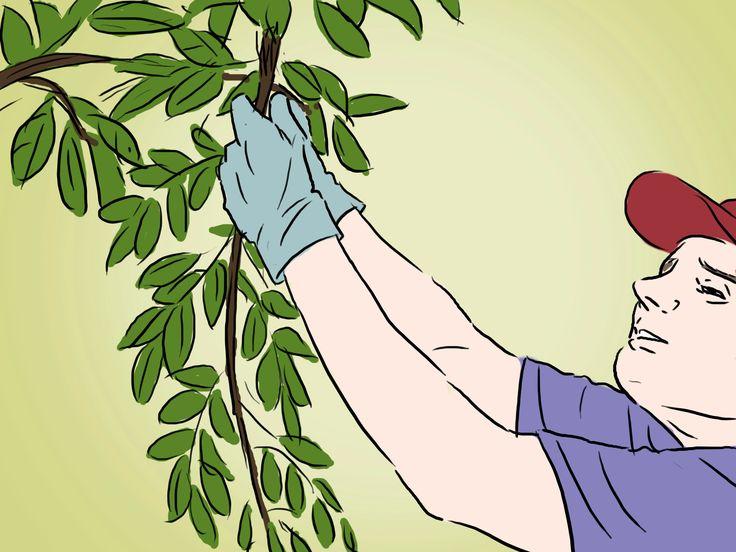 Peut-être vous êtes vous demandé si, en plantant des pépins de pomme, on pouvait avoir un splendide pommier ! D'autant plus que cette pomme, dont vous avez gardé les pépins, était succulente ! Pourquoi ne pas planter dans votre jardin un po...