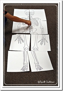 x is for x-ray.... life size scale skeleton puzzle