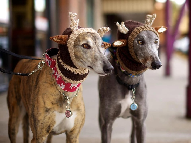 Rudolf Hats by Alibar Dog Knit : christmas dog costumes uk  - Germanpascual.Com