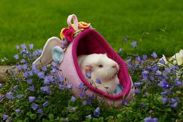 Fairy being beautiful in a garden