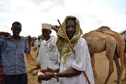 http://adesoafrica.org/  Livestock Market in Garissa, NE Kenya  © Daniel J. Gerstle