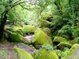 Forêt de Broceliande en Bretagne : Où est Merlin l'Enchanteur ?…