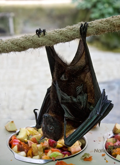 ♪♫♪ Baturday, In the Park...I think it was the Fourth of July....♪♫♪  Well, looks like a picnic for fruit bat family reunion!