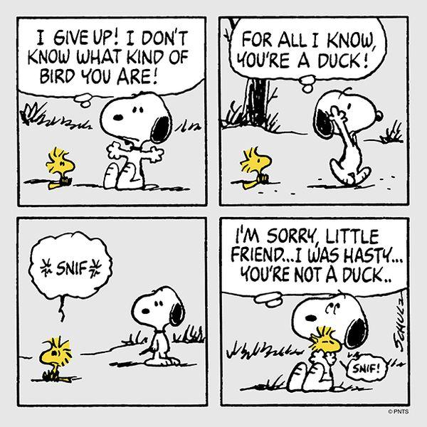 Not a duck..