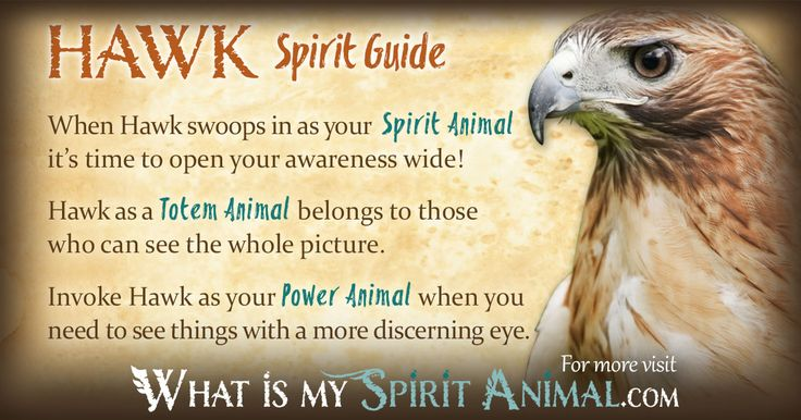 Hawk Symbolism & Meaning | spirituality and crystals ...