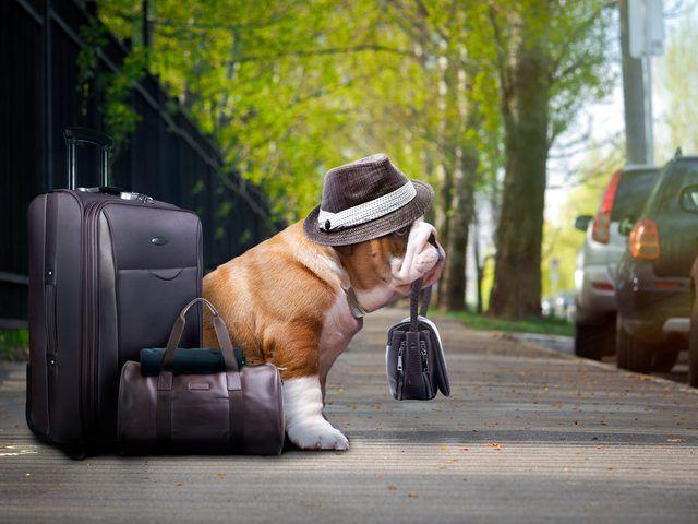 Pet Sitting: 7 Συμβουλές για να εξασφαλίσετε μια ωραία Pet Peti...