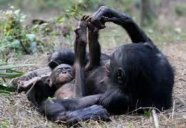 Resultado de imagen para imagenes de simios feos