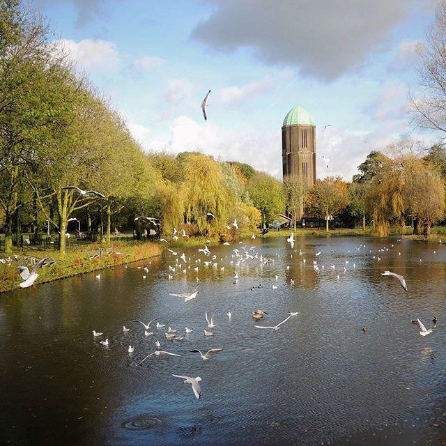 #Herfst in Park de Watertoren #Overvecht #Utrecht. Prachtige serie foto's geschoten. Kom vooral kijken in onze grote parken, want het is heel mooi nu. Met dank aan de #meeuwen die zo mooi poseren voor de #foto.