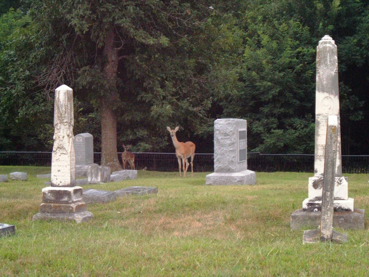 Image result for cemetery with deer grazing