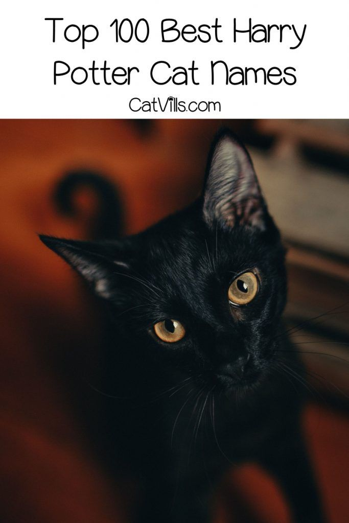 100 Magical Harry Potter Cat Names Catvills Harry Potter Cat Names Harry Potter Pet Names Cat Names