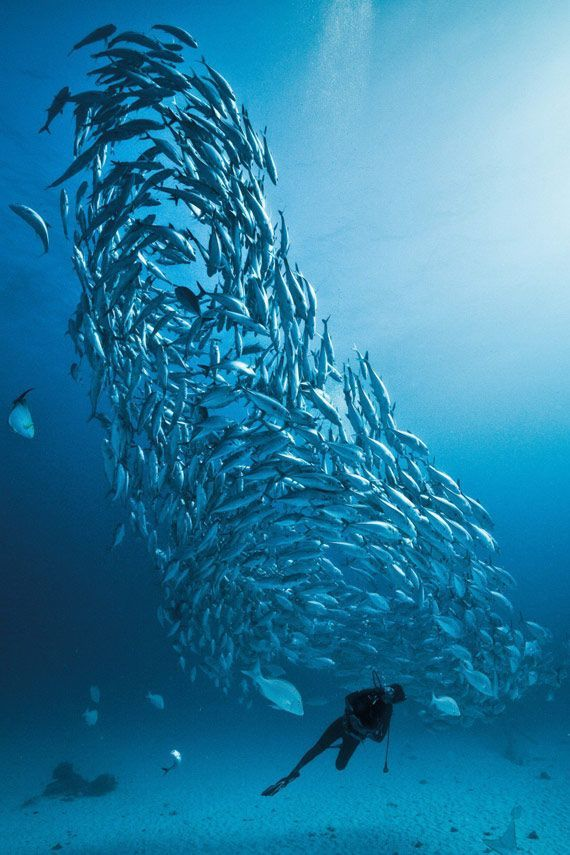 Go diving at Lady Elliot Island, Queensland, Australia - 10 Dive sites not to miss!