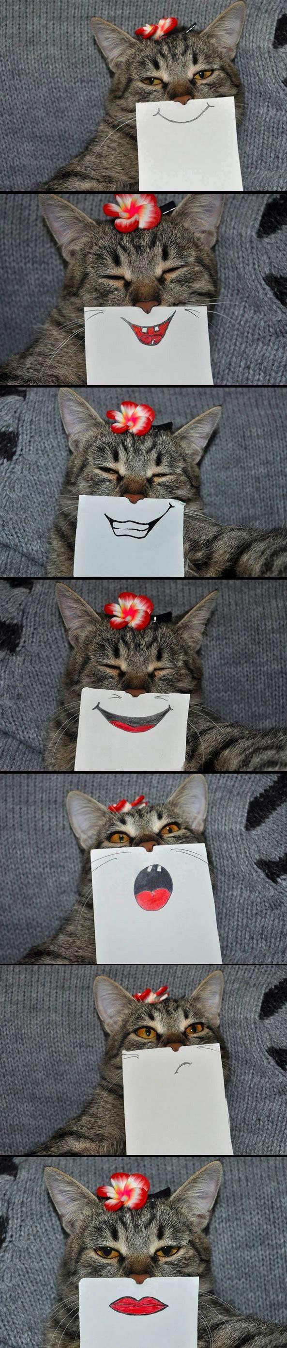 Eine Katze, eine Kamera und vieeel Freizeit | Webfail - Fail Bilder und Fail Videos