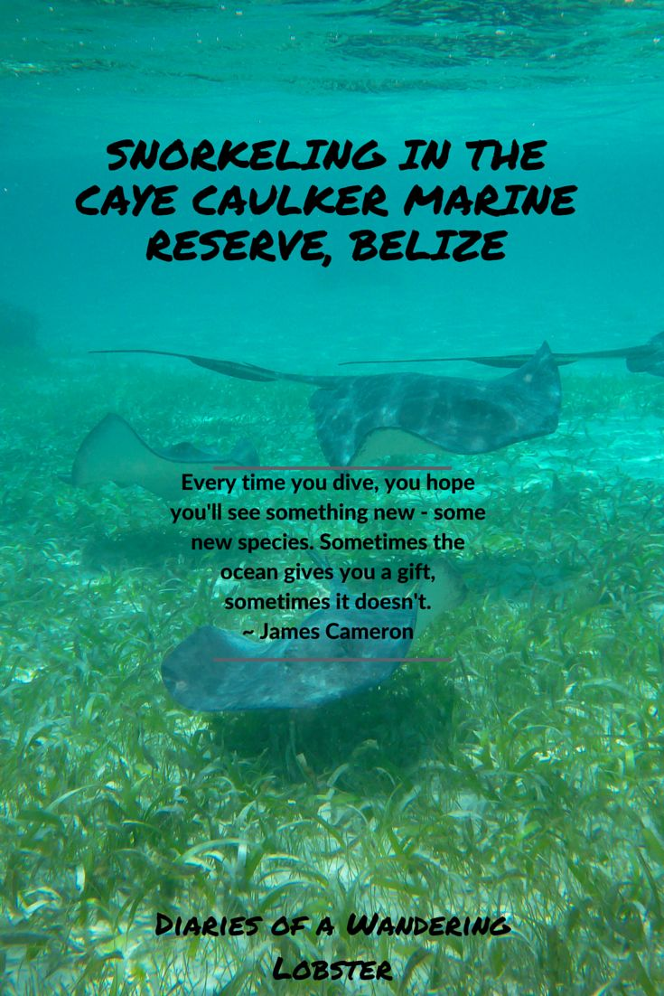 Belize is one of the top snorkeling destinations in the world. Snorkeling Caye Caulker Marine Reserve is not only one of the coolest activities you can do in Belize, but it's also budget-friendly.