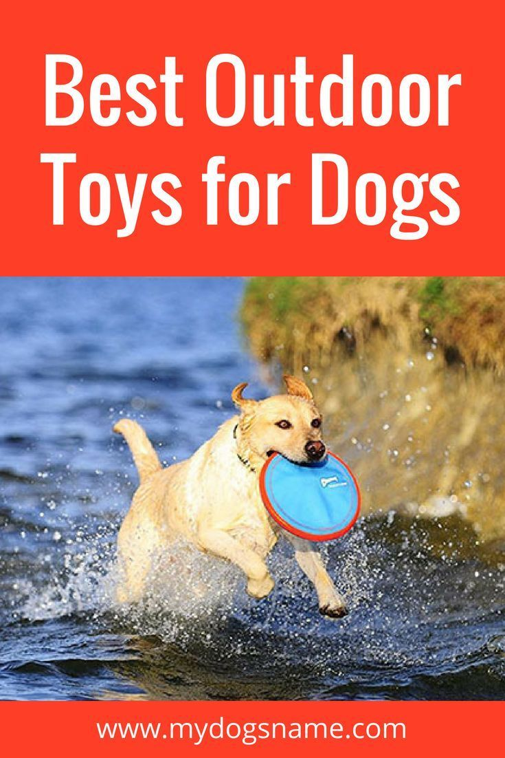 Best Outdoor Toys For Dogs 15 Perfect Picks Outdoor Dog Toys