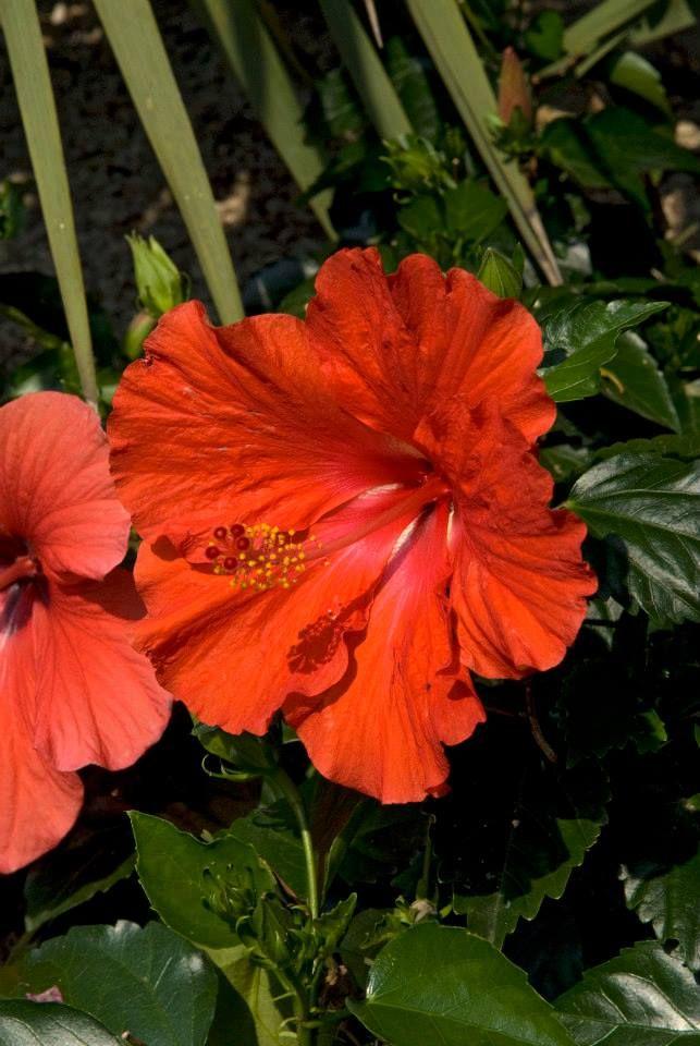 Esterni e giardini. www.colorhotel.it