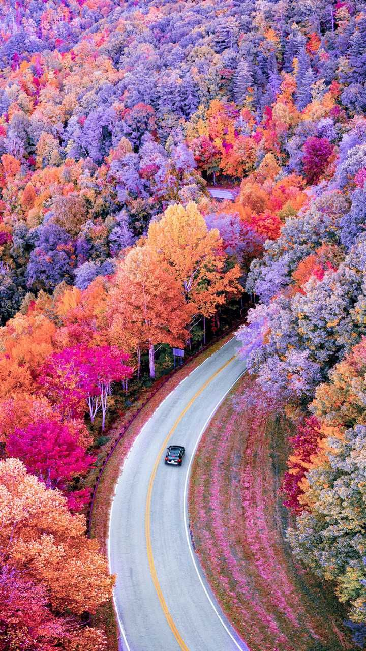 Road Path Way Car Vehicle Orange Pink Purple Trees Colorful Nature Photooftheday Qhdwallpapers Wal Nature Wallpaper Beautiful Tree Autumn Scenery
