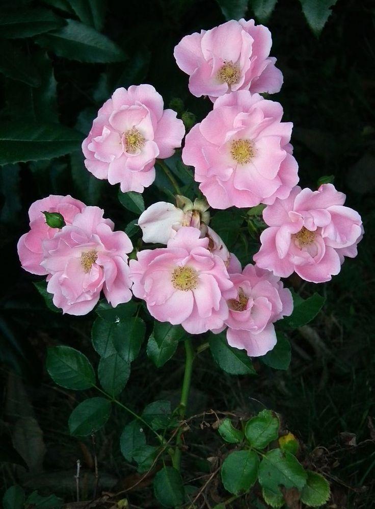 Inspirational px September Rosa Rosen pixels