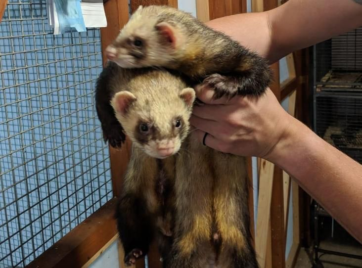 Fred And George Find A Pet Rspca Org Uk With Images Pets