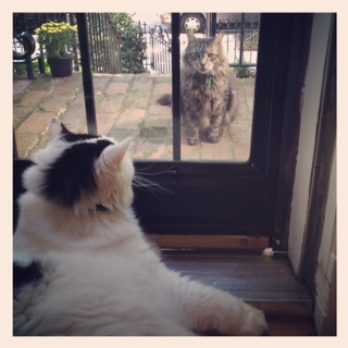 rowhouse HOME: the cat: lazy sunday cat friends   snapshot