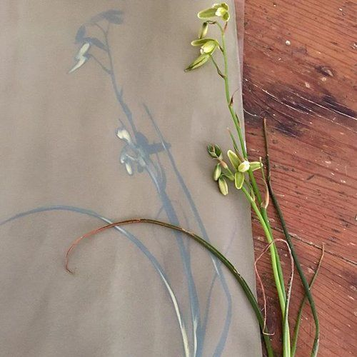 I love the greeny grey colour of a cyanotype before washing. #collecting #plants #wildflowers #createdtocreate #flowerart #cyanotype #makingart