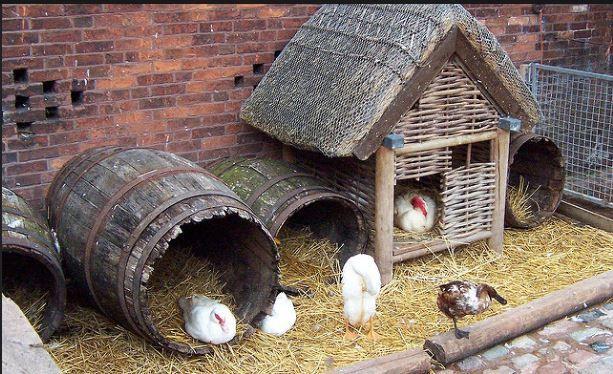 Barrel Duck Coop | 12 Duck Coop Ideas For Your Homestead