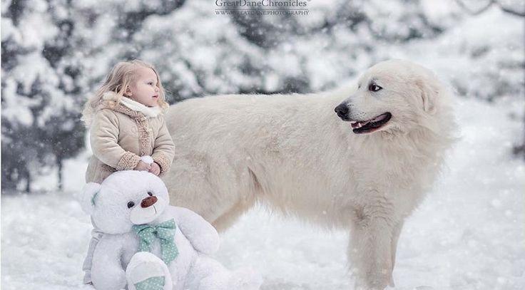 Biliyor muydun ? /// İçinizi ısıtacak bir proje: Küçük çocuklar ve büyük köpekler