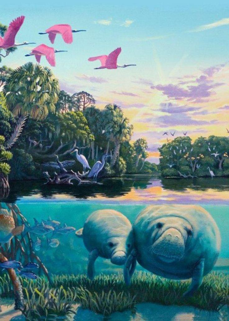 'Great Manatee River'.  Florida's incredible marine ecosystem. #manatee #manatees  #wildlife #floridawildlife #roberttheartist